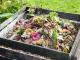 Komposztáló-szépségverseny